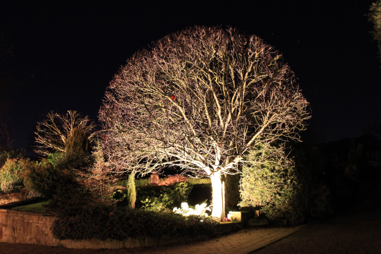 Ornamental tree LED lit saving 90% of running costs